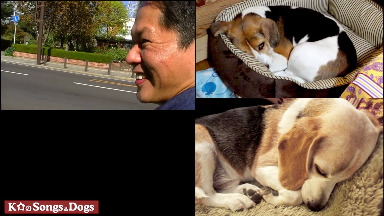 147th: K介のSongs&Dogs週末はミュージシャン