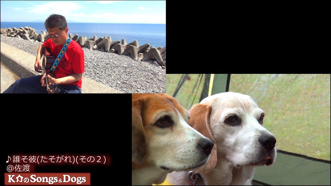170th: K介のSongs&Dogs週末はミュージシャン