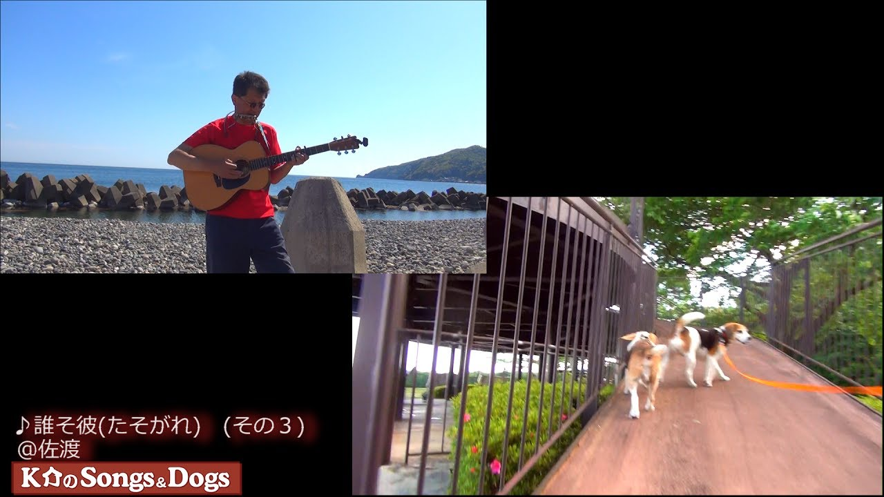173th: K介のSongs&Dogs週末はミュージシャン