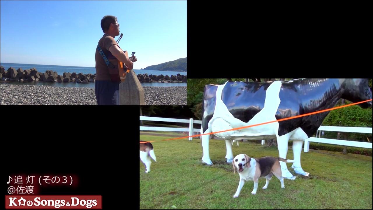 174th: K介のSongs&Dogs週末はミュージシャン