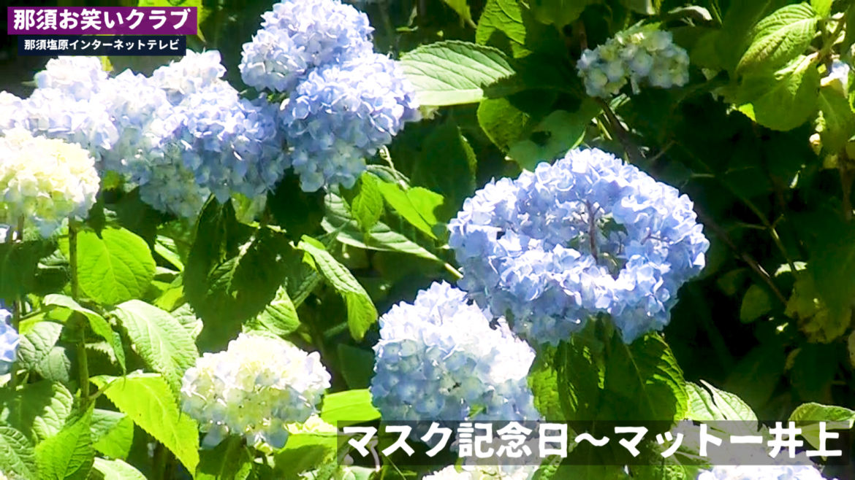 マスク記念日~マットー井上