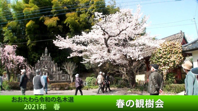 春の観樹会~おおたわら名木ハイキング2021年3月31日