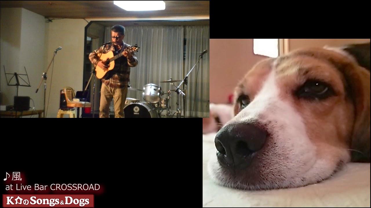 203th: K介のSongs&Dogs週末はミュージシャン