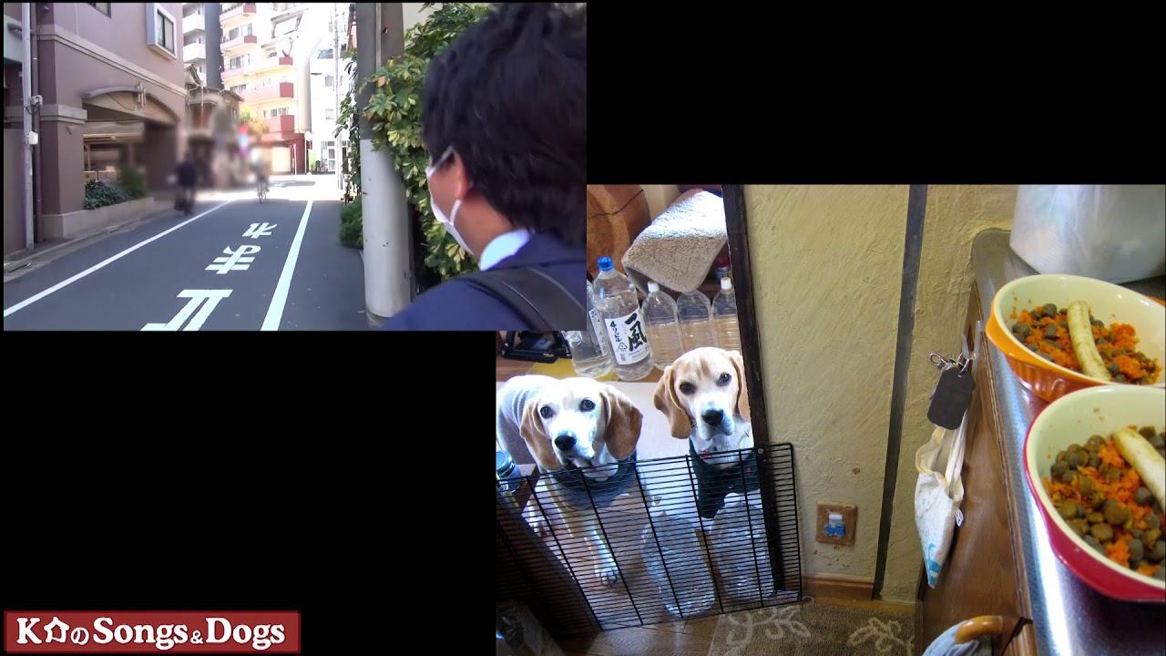 219th: K介のSongs&Dogs週末はミュージシャン