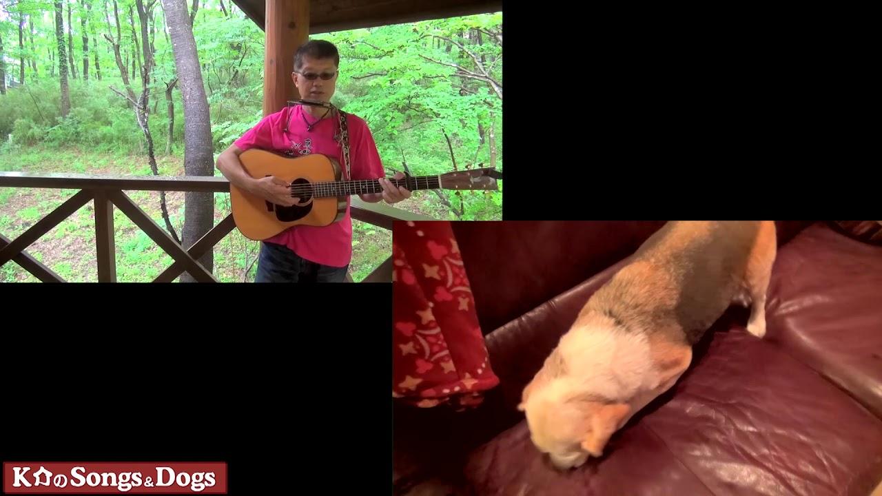 230th: K介のSongs&Dogs週末はミュージシャン