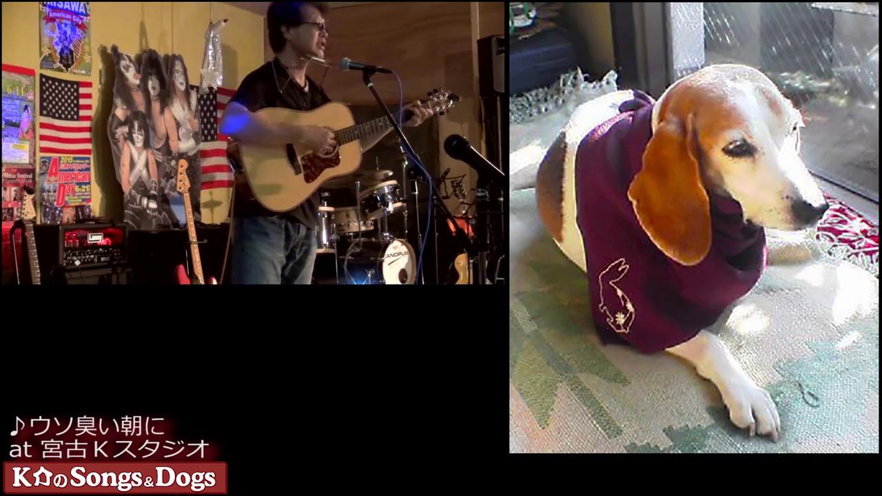 231th: K介のSongs&Dogs週末はミュージシャン