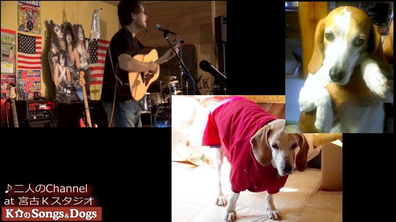 234th: K介のSongs&Dogs週末はミュージシャン