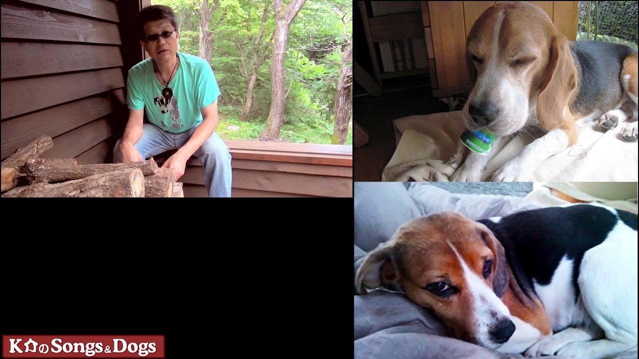 242th: K介のSongs&Dogs週末はミュージシャン