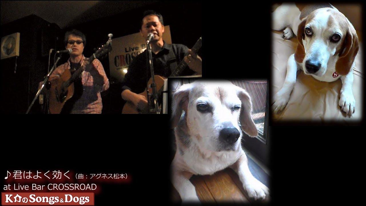 247th: K介のSongs&Dogs週末はミュージシャン