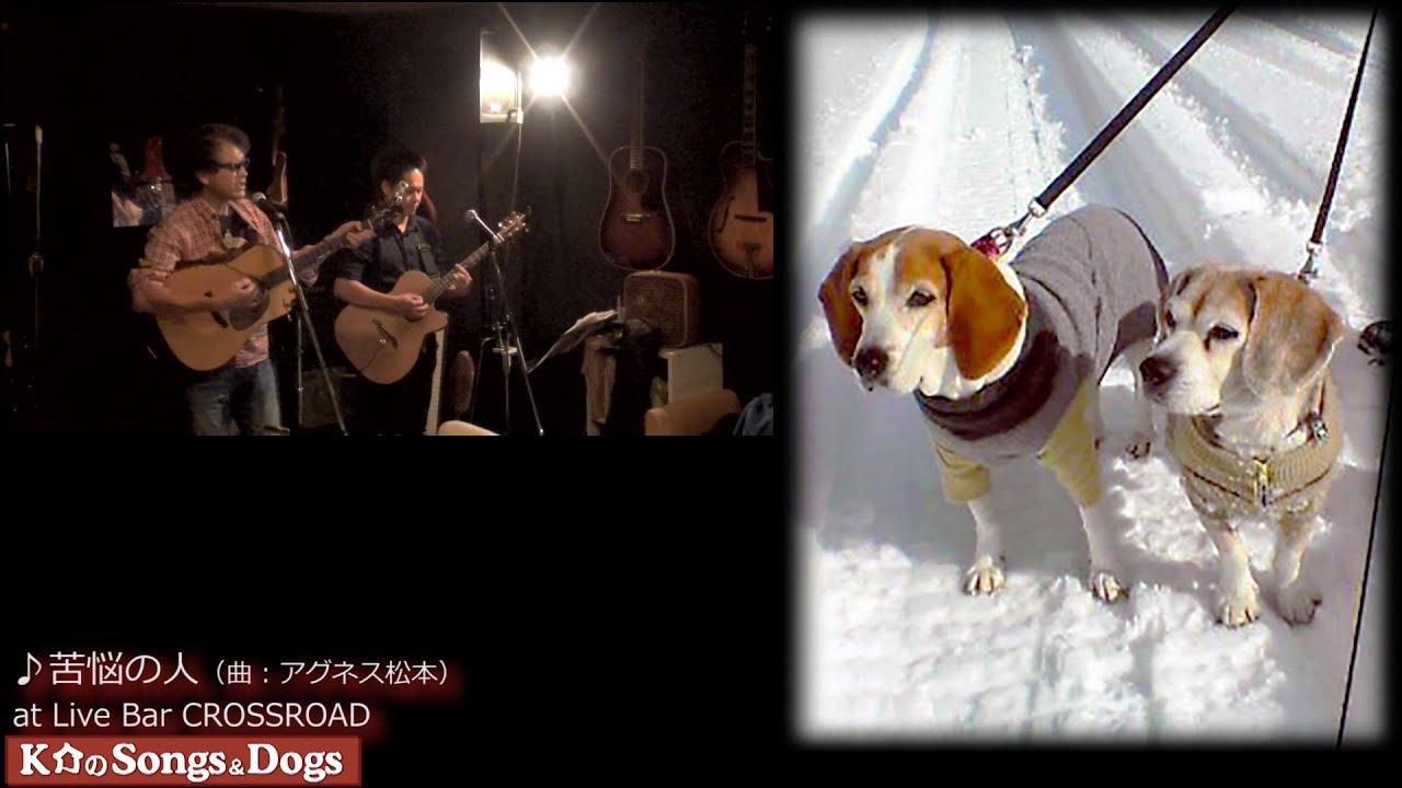 252th: K介のSongs&Dogs週末はミュージシャン