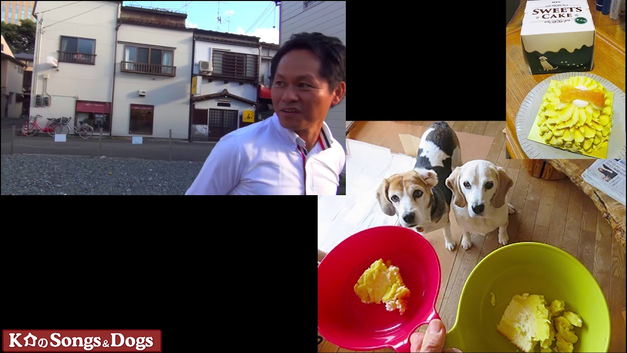 254th: K介のSongs&Dogs週末はミュージシャン