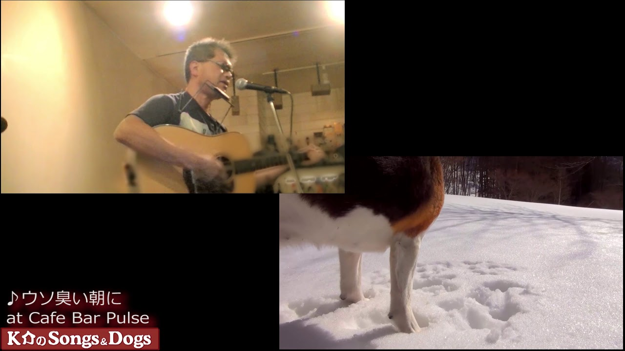 263th: K介のSongs&Dogs週末はミュージシャン