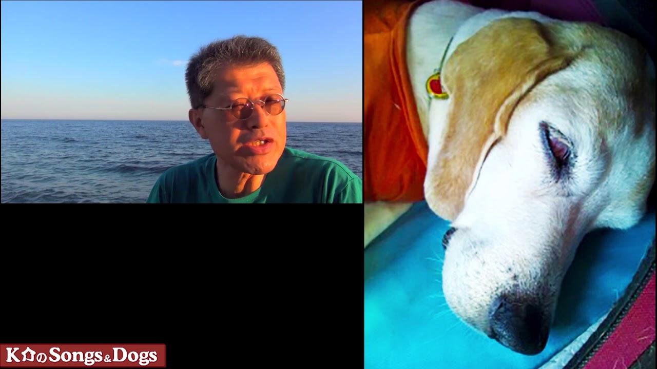 276th: K介のSongs&Dogs週末はミュージシャン