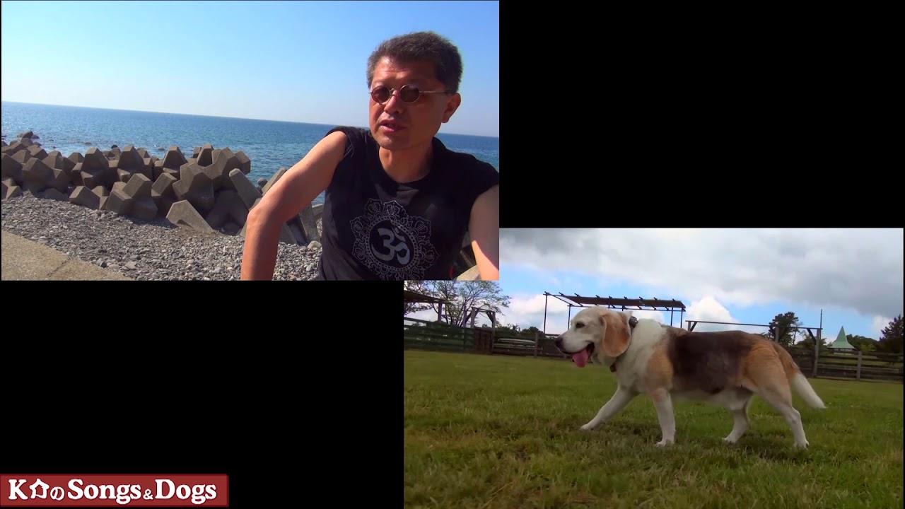 282th: K介のSongs&Dogs週末はミュージシャン