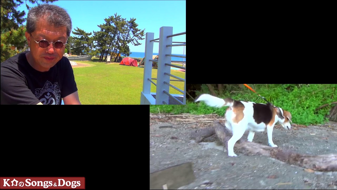 284th: K介のSongs&Dogs週末はミュージシャン