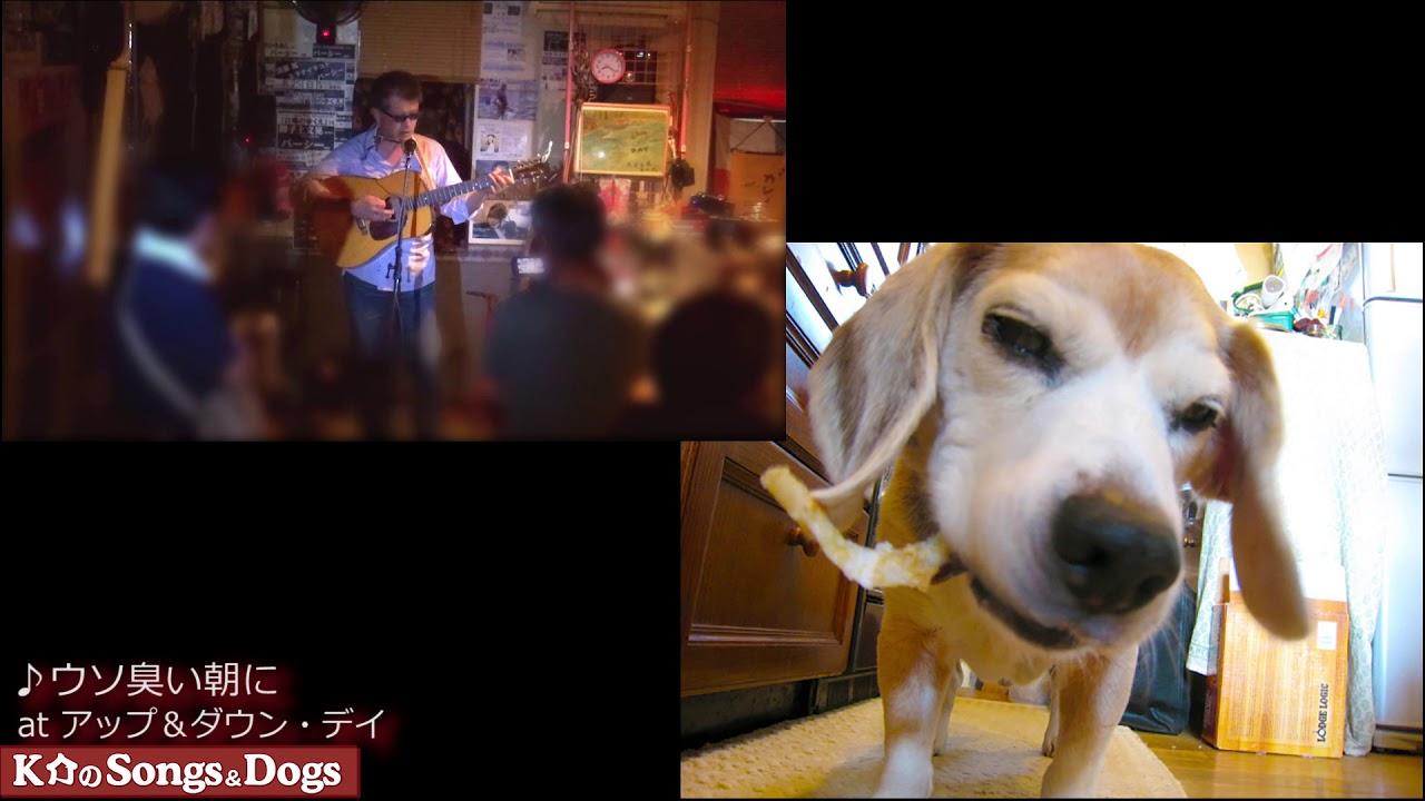 295th: K介のSongs&Dogs週末はミュージシャン