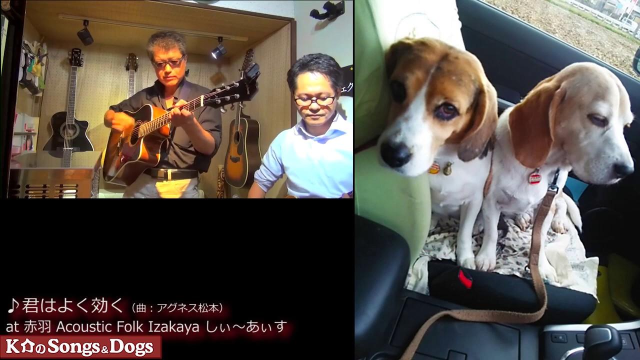 297th: K介のSongs&Dogs週末はミュージシャン