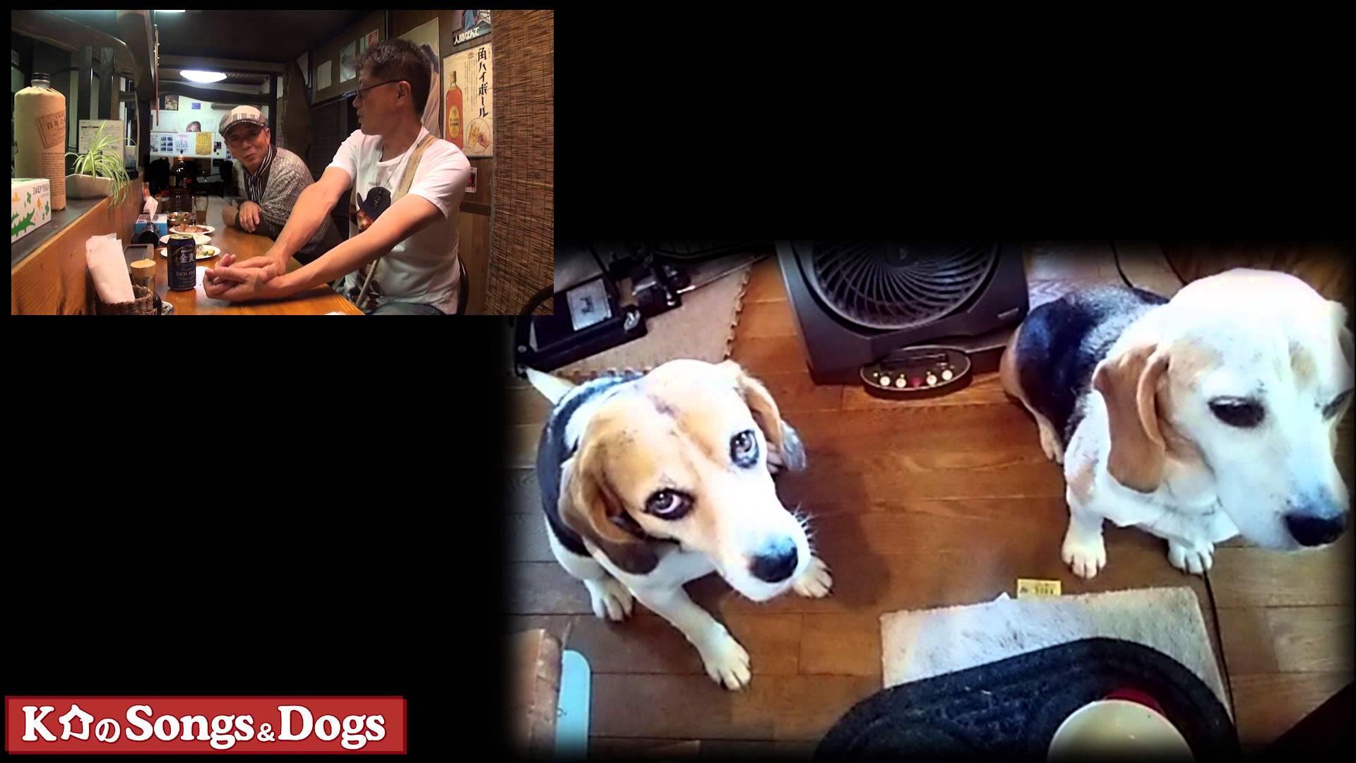 K介のSongs&Dogs週末はミュージシャン93
