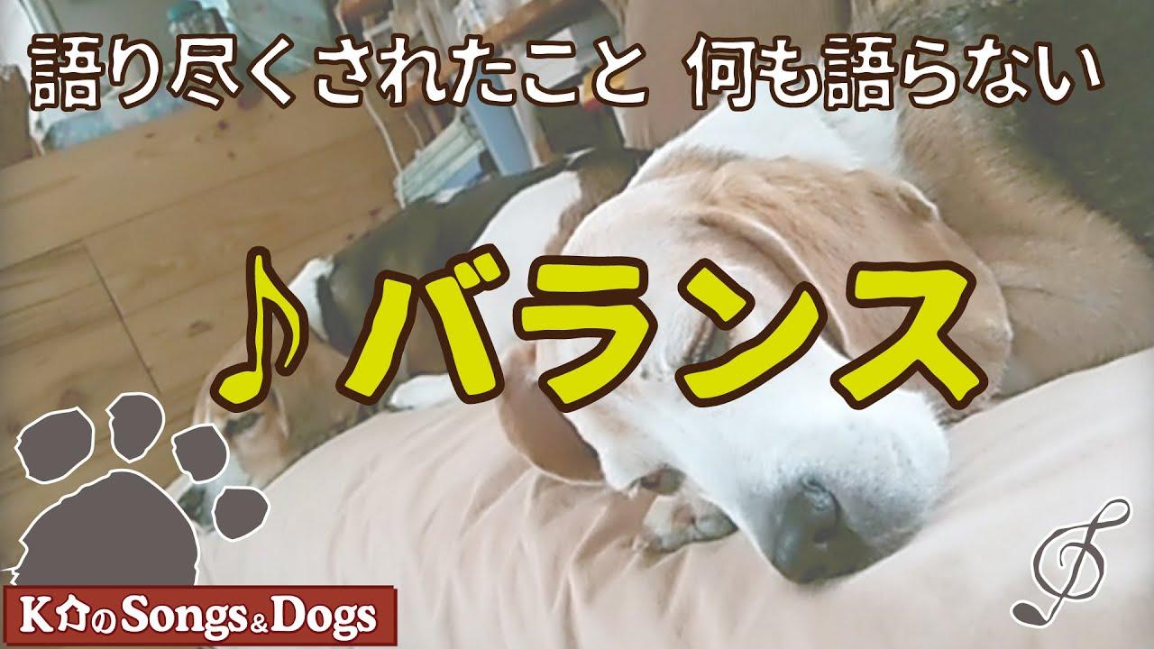 ♪バランス : K介のSongs&Dogs週末はミュージシャン