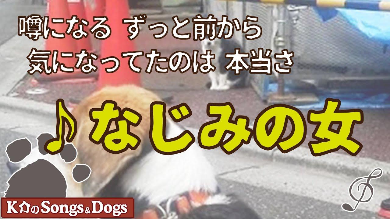 ♪なじみの女  : K介のSongs&Dogs週末はミュージシャン