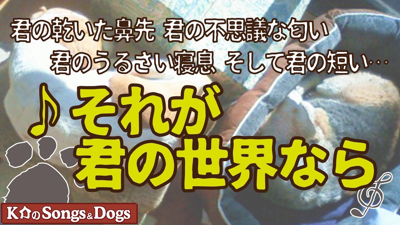 ♪それが君の世界なら  : K介のSongs&Dogs週末はミュージシャン