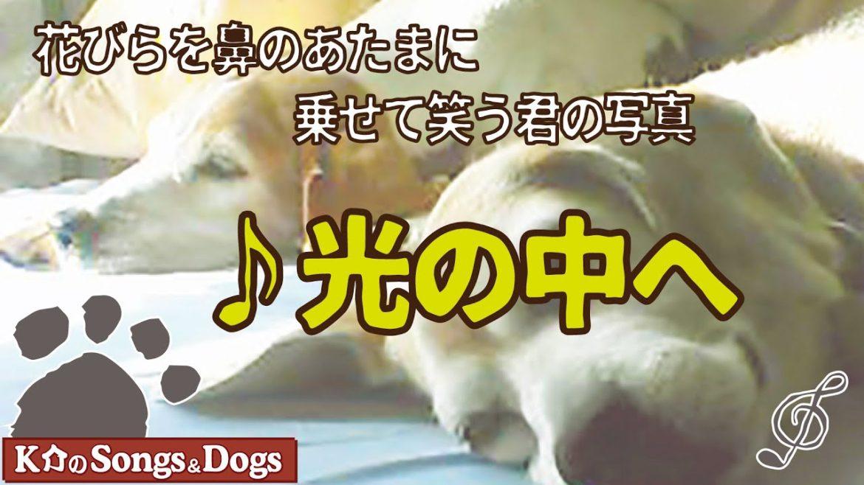 ♪光の中へ : K介のSongs&Dogs週末はミュージシャン