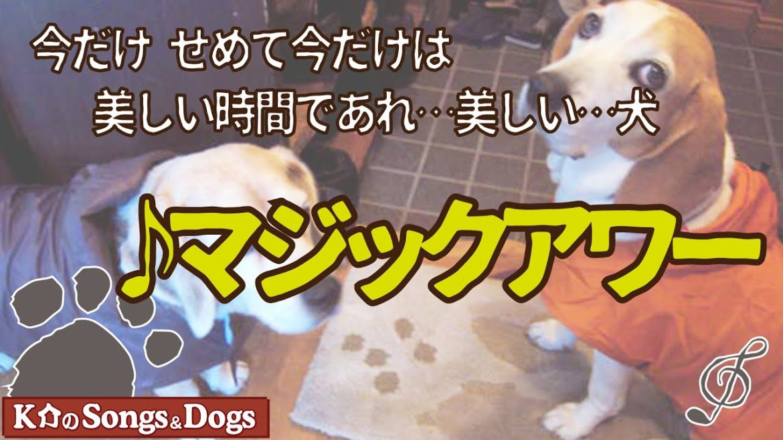 ♪マジックアワー: K介のSongs&Dogs週末はミュージシャン