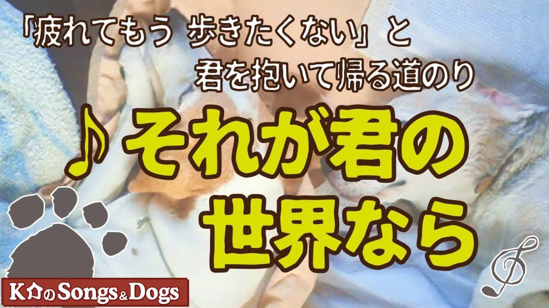 ♪それが君の世界なら: K介のSongs&Dogs週末はミュージシャン