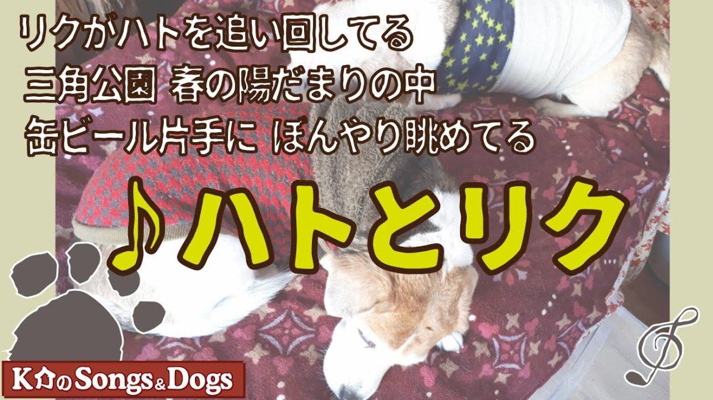 ♪ハトとリク : K介のSongs&Dogs週末はミュージシャン