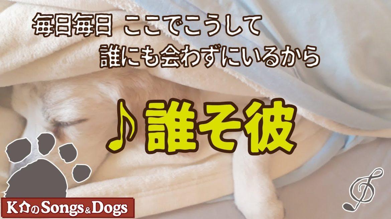 ♪誰そ彼 : K介のSongs&Dogs週末はミュージシャン