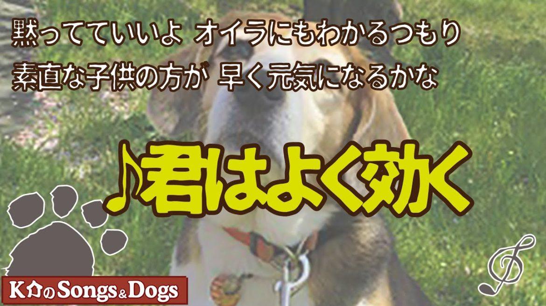 ♪君はよく効く : K介のSongs&Dogs週末はミュージシャン