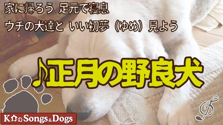 ♪正月の野良犬 : K介のSongs&Dogs週末はミュージシャン
