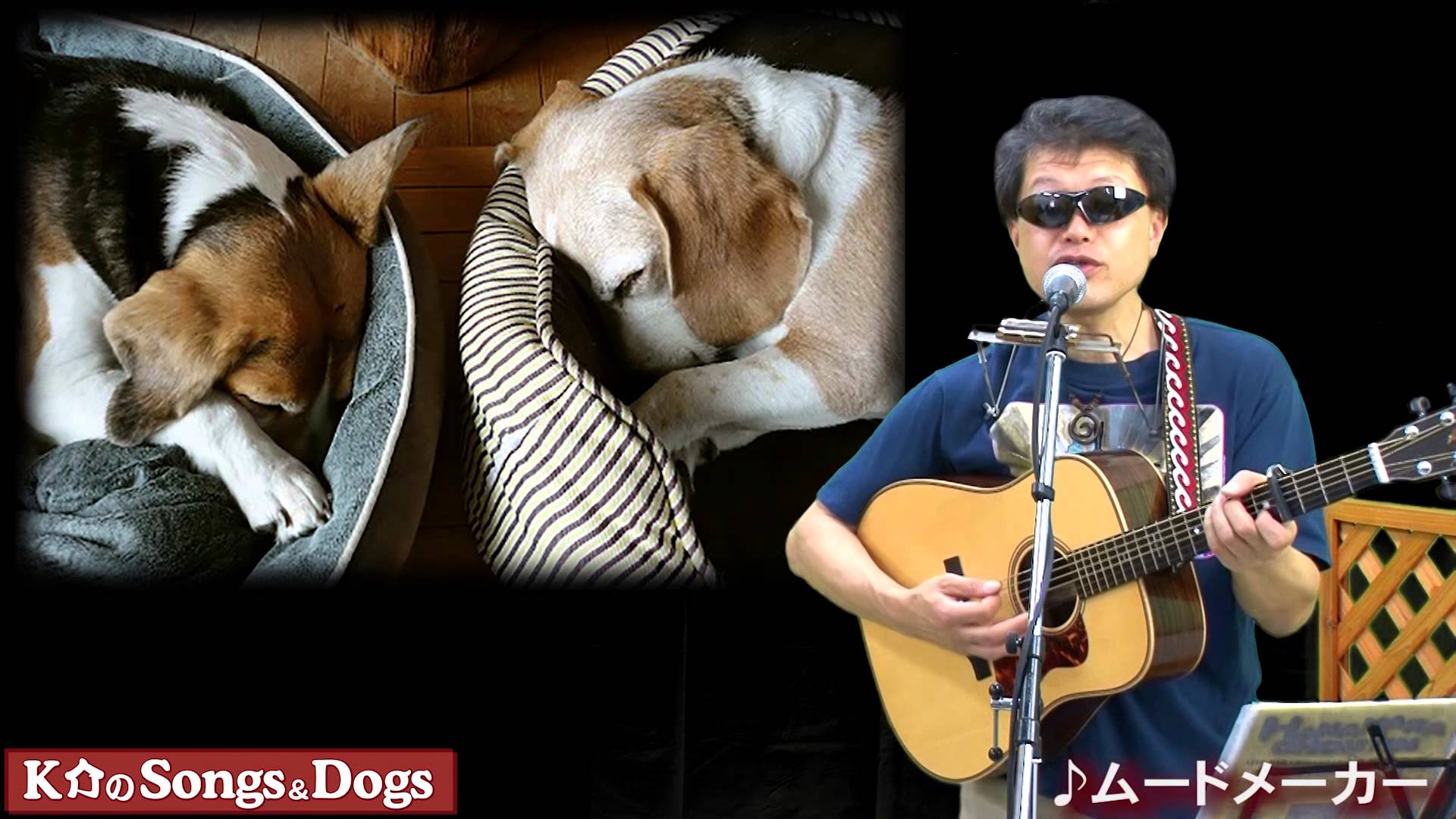 K介のSongs&Dogs週末はミュージシャン~64
