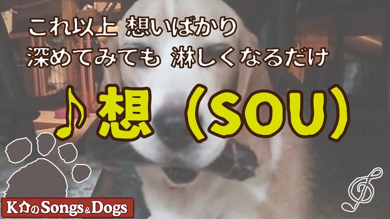 ♪想(SOU): K介のSongs&Dogs週末はミュージシャン