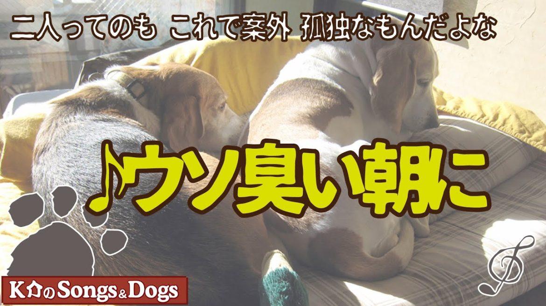 ♪ウソ臭い朝に(withメグさん): K介のSongs&Dogs週末はミュージシャン